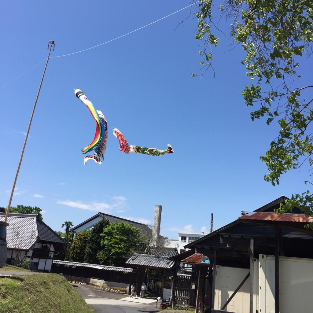 千葉県 日本酒 飯沼本家 まがり家9