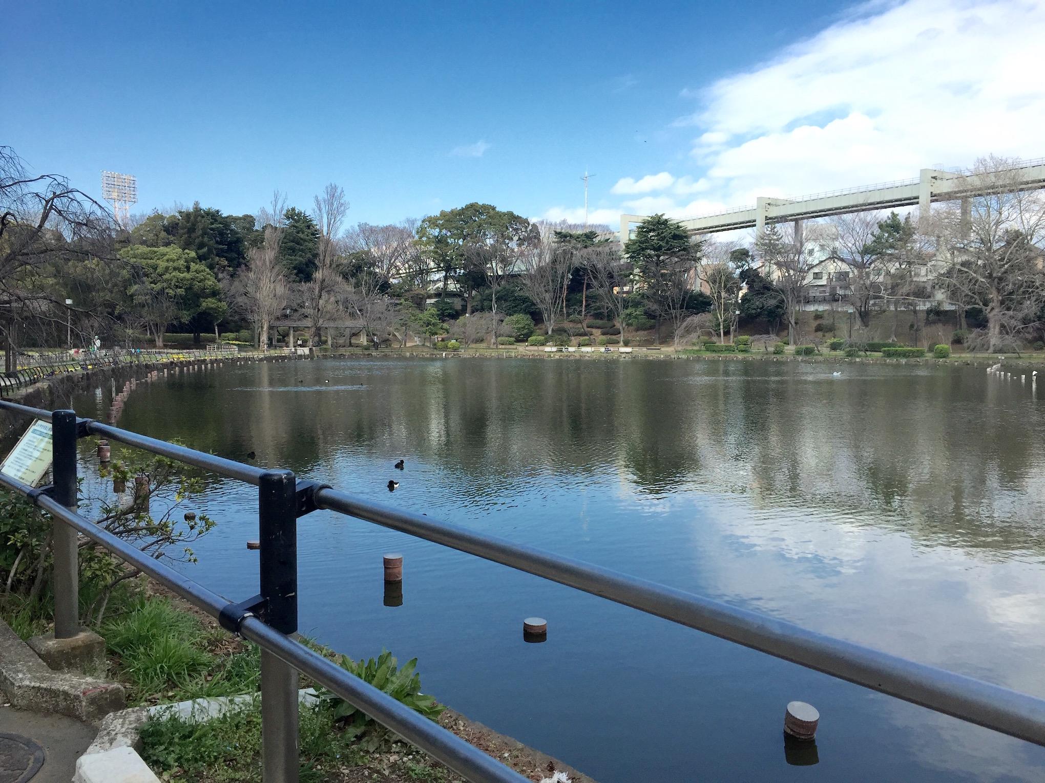 千葉 桜 千葉公園