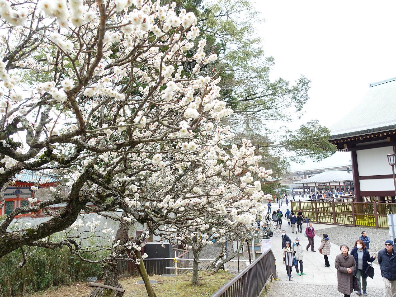 成田山の梅まつり